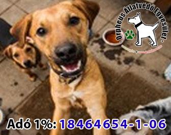 állatmenhely, adó 1 felajánlás, kutya cica gazdikereső